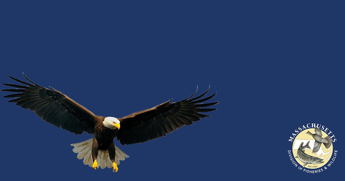 Support Rare And Endangered Species In Massachusetts Brookline Bird Club